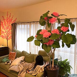 おはながみ/お花見/桜の木/ウォールデコレーション/さくら...などのインテリア実例 - 2020-03-30 09:22:27