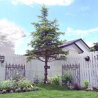 、クリスマスツリーは冗談だョ٩( ᐛ )وに関するcheeさんの実例写真