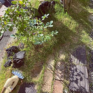 eくらしプロジェクト/山善くらしのeショップ/山善ガーデン部/山善園芸部/山善...などのインテリア実例 - 2021-07-26 17:27:11