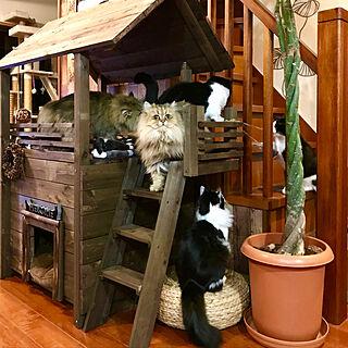リビング/殺処分のない世界/小さな命/保護猫/ねこのいる日常...などのインテリア実例 - 2018-01-19 22:56:34