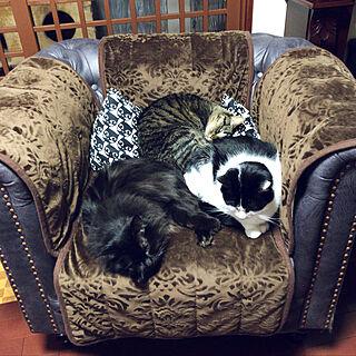 リビング/チェスターフィールド ソファ/ソファカバー/IKEA/猫と暮らす...などのインテリア実例 - 2018-01-07 17:52:08