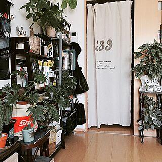 玄関/入り口/ニトリ/Snap-on/マドカズラ/ウンベラータ...などのインテリア実例 - 2016-05-22 08:03:48