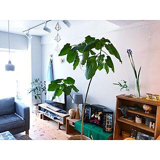 女性家族暮らし2LDK、部屋飾りに関するHisayoさんの実例写真
