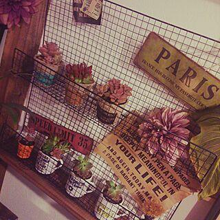 壁/天井/観葉植物/多肉/多肉植物/HAND MADE...などのインテリア実例 - 2016-02-15 23:02:49