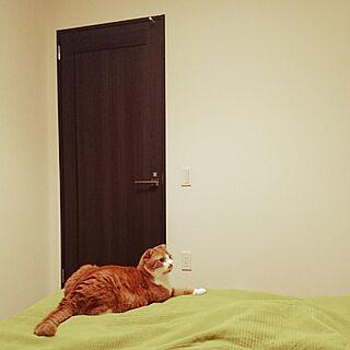 ベッド周り/お気に入りの場所/猫のいる生活/スコティッシュフォールド/ねこと暮らす。...などのインテリア実例 - 2016-05-24 22:55:33