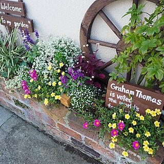 ガーデニング/ガーデン雑貨/お花寄せ植え♡/花壇DIY/花のある暮らし...などのインテリア実例 - 2019-03-24 23:55:49