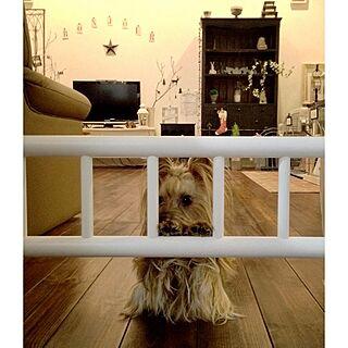 リビング/犬部♪/着脱式ルンバ通すが犬は通せん棒のインテリア実例 - 2013-12-15 18:10:33