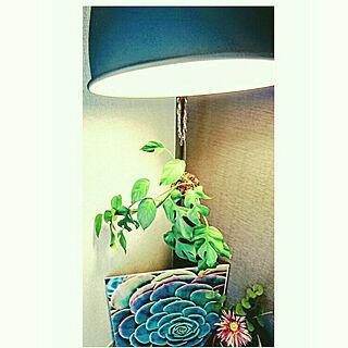 壁/天井/くつろぎ空間/1R/植物/照明...などのインテリア実例 - 2018-04-22 12:55:08
