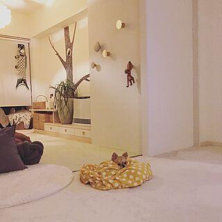部屋全体/マンション/北欧インテリア/犬のいる暮らし/マンションインテリア...などのインテリア実例 - 2017-04-14 22:31:23