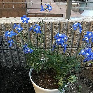 女性家族暮らし4LDK、青い花に関するsatomiさんの実例写真