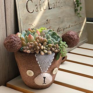 女性家族暮らし4LDK、たにくま鉢に関するhamuさんの実例写真