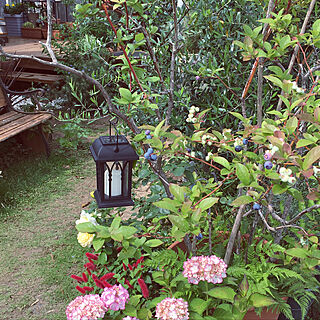 玄関/入り口/ガーデン/ビバホーム/LED/ソーラーランタンライト...などのインテリア実例 - 2018-06-06 12:44:38