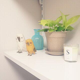 バス/トイレ/鳥/観葉植物/IKEA/DOUBLEDAY ダブルディのインテリア実例 - 2015-04-12 02:14:23