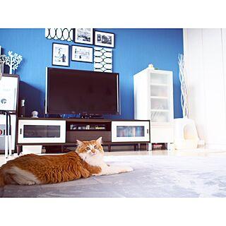 リビング/猫のプレイスペース/テレビ台/壁紙 ブルー/ラグ グレー...などのインテリア実例 - 2016-07-05 13:44:58