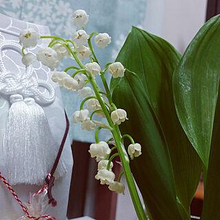 リビング/感謝/植物/幸せ/メモリアルコーナー...などのインテリア実例 - 2018-04-26 22:51:59