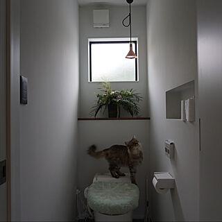 猫と暮らす/猫と植物/猫と暮らす家/塗装壁/猫との暮らし...などのインテリア実例 - 2020-10-14 20:33:49