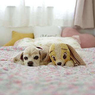 ベッド周り/これさえあれば、わたしの部屋/わんわん物語/犬と暮らす/アメリカンコッカースパニエル...などのインテリア実例 - 2018-07-16 17:22:56