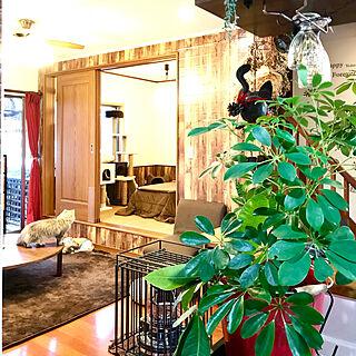 観葉植物の人気の写真(RoomNo.3201203)