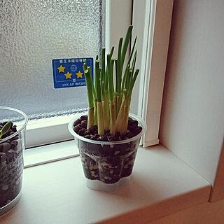 窓辺のグリーンの人気の写真(RoomNo.3089758)