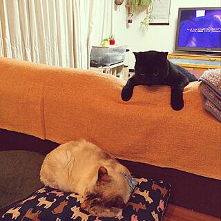 女性家族暮らし、黒猫に関するnanaさんの実例写真