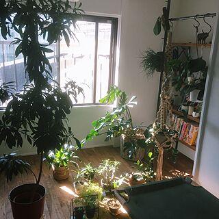 部屋全体/植物/リノベーション/観葉植物/アンティーク/アメリカンヴィンテージ...などのインテリア実例 - 2015-11-16 10:38:05