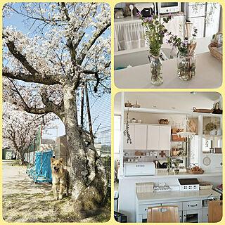 女性家族暮らし、茶太郎に関するkaoriさんの実例写真