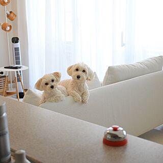 犬のいる暮らしの人気の写真(RoomNo.2764775)