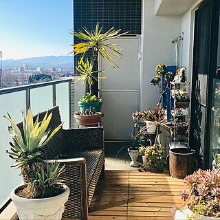 部屋全体/マンションベランダ/ベランダからの景色/ベランダガーデン/植物と暮らす毎日...などのインテリア実例 - 2019-01-19 11:34:16