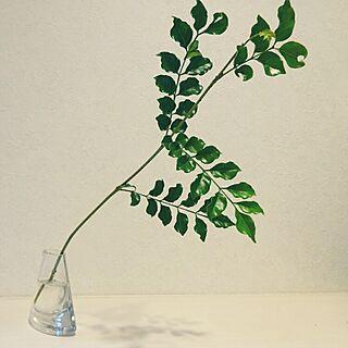 女性家族暮らし4LDK、herb GREENのある暮らしに関する123sgnbさんの実例写真
