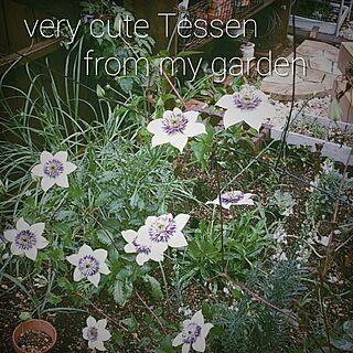 玄関/入り口/植物/花/ガーデニング/NO GREEN NO LIFE...などのインテリア実例 - 2015-05-28 14:34:29
