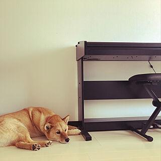 北海道犬/電子ピアノ/やっぱり犬☺︎のインテリア実例 - 2020-06-07 15:10:30