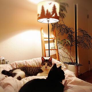 ベッド周り/ねこのいる日常/ねこと暮らす。/ねこ/ちまき...などのインテリア実例 - 2020-05-24 22:22:05