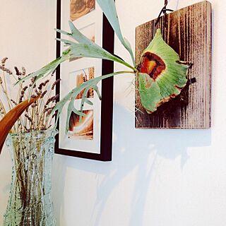 壁/天井/観葉植物/植物/IKEAのインテリア実例 - 2014-10-17 16:20:31