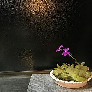 女性家族暮らし、大理石に関するkariruさんの実例写真