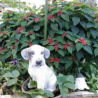 女性、庭の置物に関するshoko0420さんの実例写真