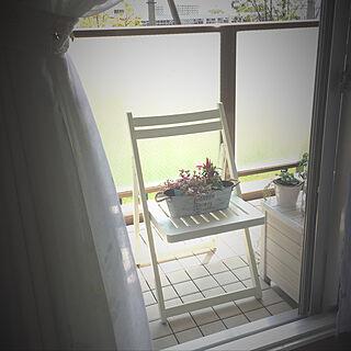 リビング/トウガラシ/リメイク椅子/ベランダ/いいね!押し逃げばかりでごめんなさい。...などのインテリア実例 - 2017-08-26 08:50:04