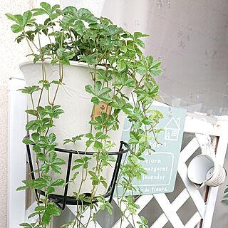 一人暮らし/賃貸インテリア/花のある暮らし/いつもいいねやコメありがとうございます♡/植物のある暮らし...などのインテリア実例 - 2019-07-02 19:11:59