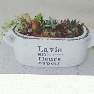 キッチン/植物/寄せ植え/Garden雑貨/花のある暮らし...などのインテリア実例 - 2016-05-28 16:24:11