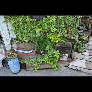 男性家族暮らし、花壇 kadanに関するGreenWorksさんの実例写真