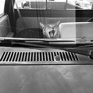 部屋全体/ねこ/ねこと暮らす。/きじとら猫/どらえもんのインテリア実例 - 2016-11-22 21:38:26