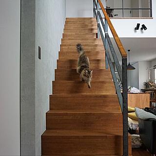 ねこと暮らす/猫のいる生活/猫のいる暮らし/猫のいる日常/猫との暮らし...などのインテリア実例 - 2019-07-04 07:28:42
