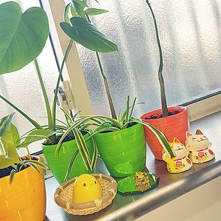 女性、100均 多肉植物に関するyokoさんの実例写真