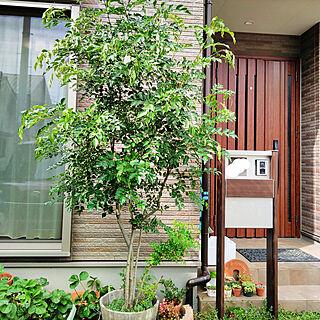 玄関/入り口/シマトネリコ/シンボルツリーはシマトネリコ/庭/にわのある暮らし...などのインテリア実例 - 2020-06-28 16:15:28