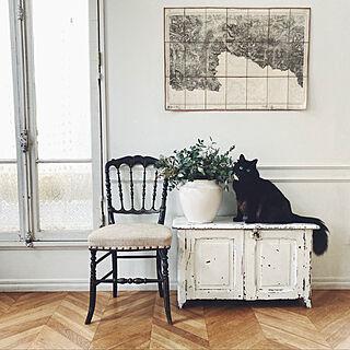 花のある暮らし/アンティーク椅子/フレンチアンティーク/ブロカント/ヘリンボーンの床...などのインテリア実例 - 2021-02-16 17:31:49