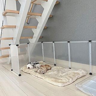 ホワイト×グレー/グレーの壁/アクセントクロス/階段下スペース/老犬と暮らす...などのインテリア実例 - 2020-08-29 17:10:47