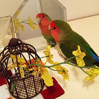 女性、鳥かごに関するtoratanさんの実例写真