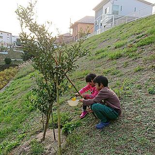 女性39歳の家族暮らし4LDK、庭のある暮らしに関するiiko5151さんの実例写真