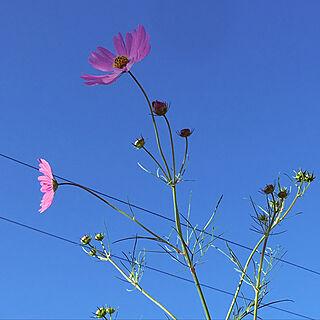 花のある生活の人気の写真(RoomNo.3025836)