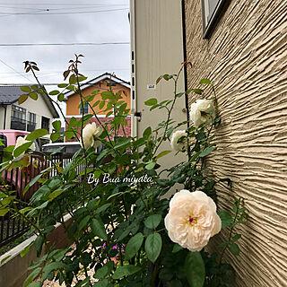 玄関/入り口/バラが大好き♪/マイホーム/小さなおうち/小さな庭...などのインテリア実例 - 2017-08-04 15:40:47