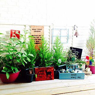 玄関/入り口/NO GREEN NO LIFE/セリア/植物/ウッドデッキ...などのインテリア実例 - 2015-06-01 17:44:11